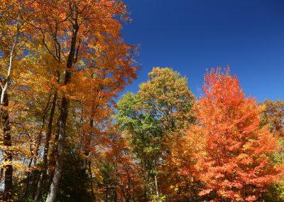 Autumn color contrasts.